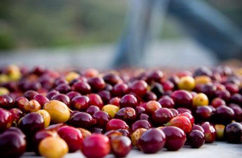 榴莲,大树菠萝,酱油……这些味道从何而来?